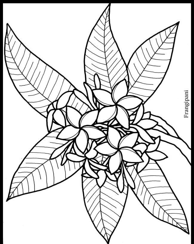 Frangipani Little Tropical Flowers Stained Glass Colouring Page