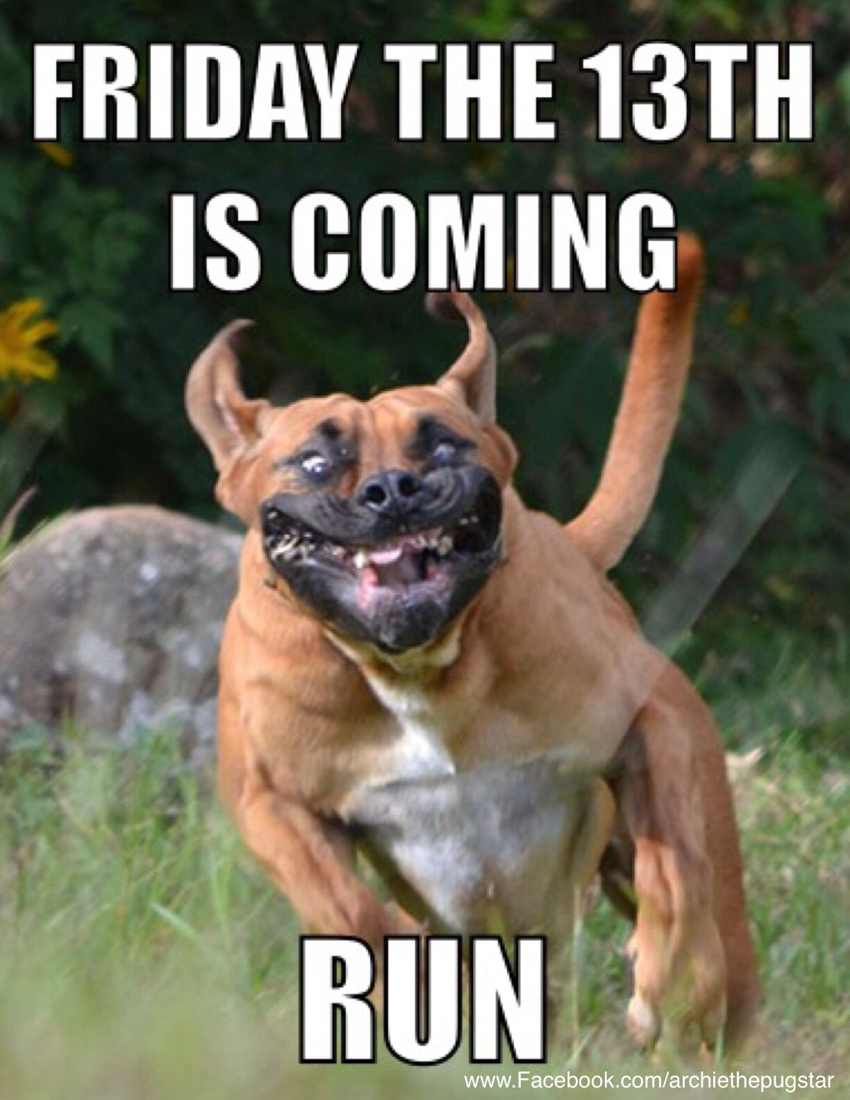 Friday the 13th humour Dog face, Scary dogs