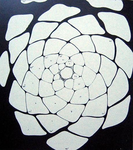 Why Fibonacci Faith