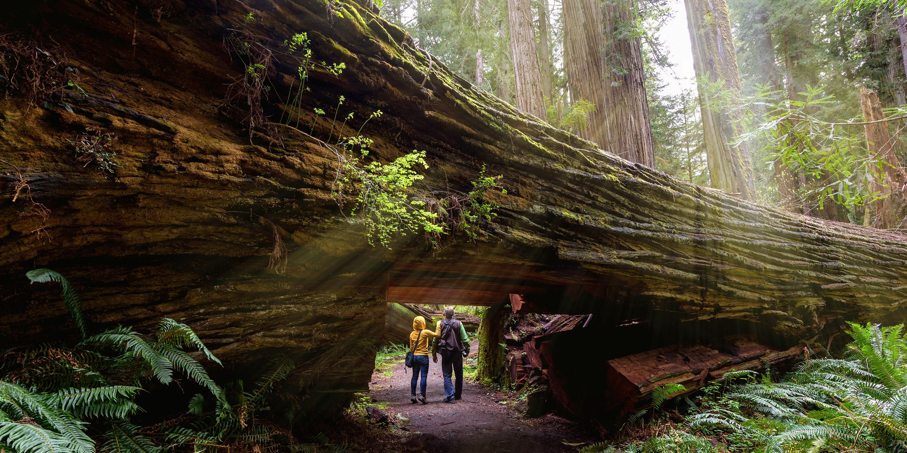 Best Day Hikes in California: From Easiest to Hardest