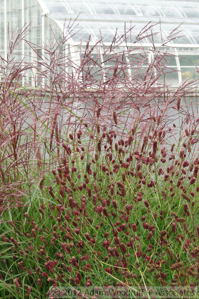 Rhs Wisley 049 Azaleas Garden Dream Garden Trees To Plant