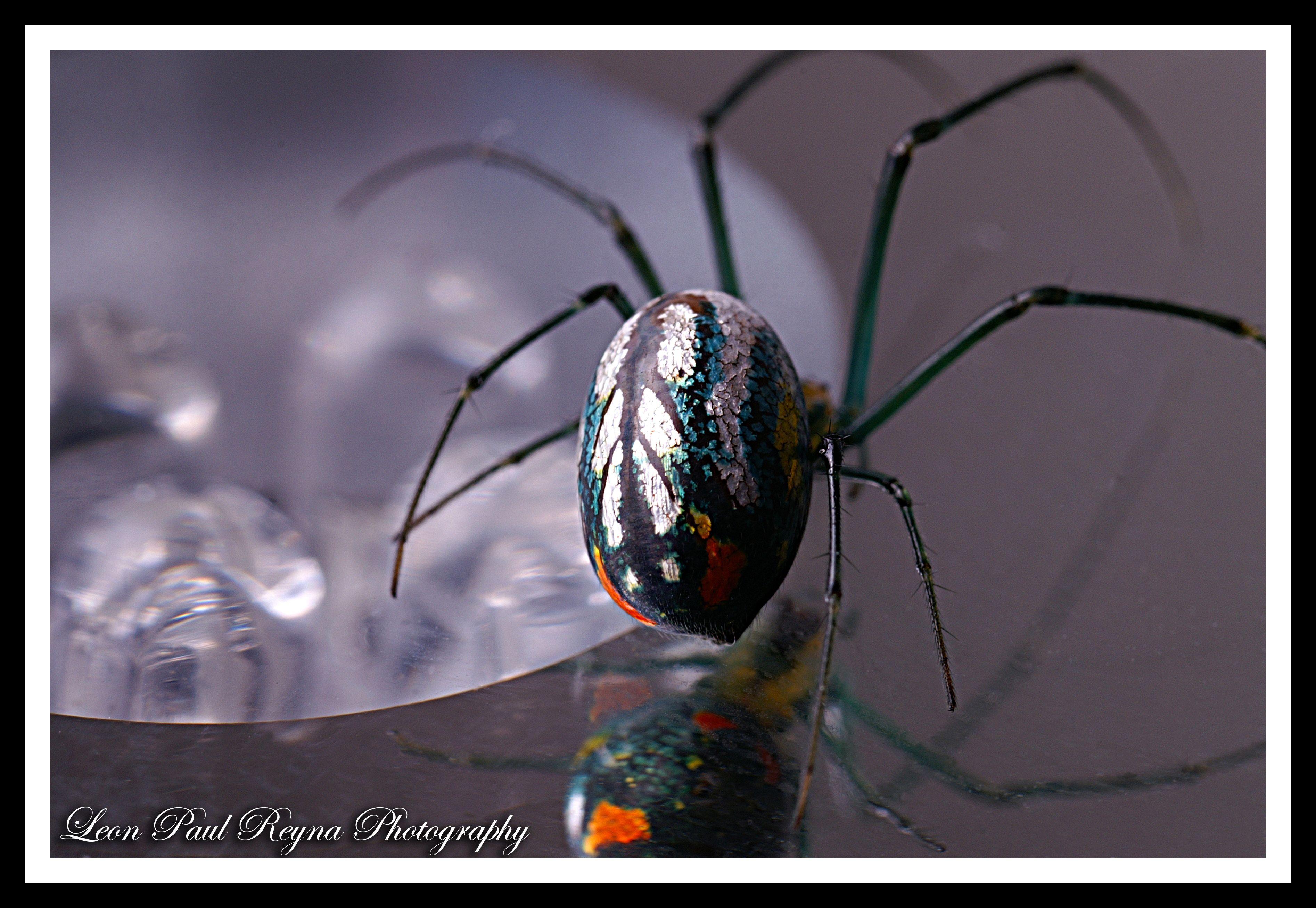 Metallic Silver Green Spider III