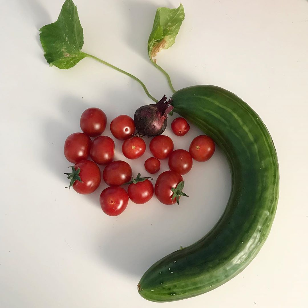 Unsere Heutige Ernte Die Tomaten Werden Nun Nach Und Nach Alle Rot Von Den Gurken Gibt Es Noch Ein Paar Wenige Und Manchmal Kann Erntezeit Garten Ernte