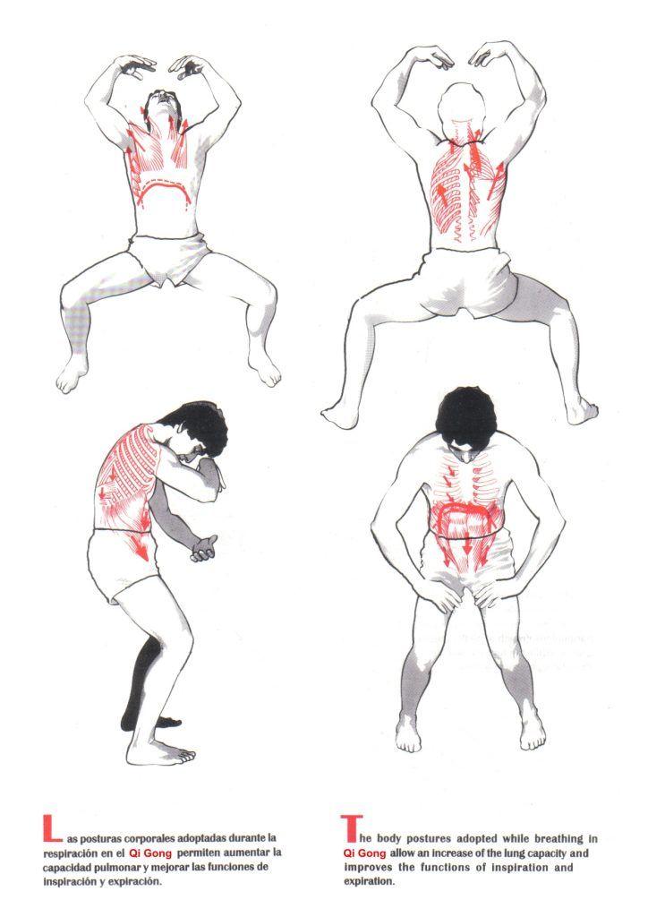 Beneficios Para La Salud En La Práctica Qigong Qigong Ejercicios De Tai Chi Ejercicios Respiratorios