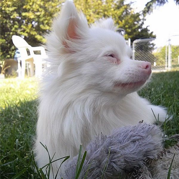 Pin By Shannon Pawsens On Dogs Other Cuties Pinterest Albino - 22 adorable albino animals without colour