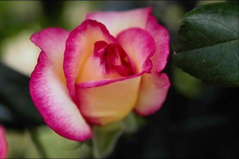 Fotos de flores bonitas flores preciosas pinterest - Fotos flores preciosas ...