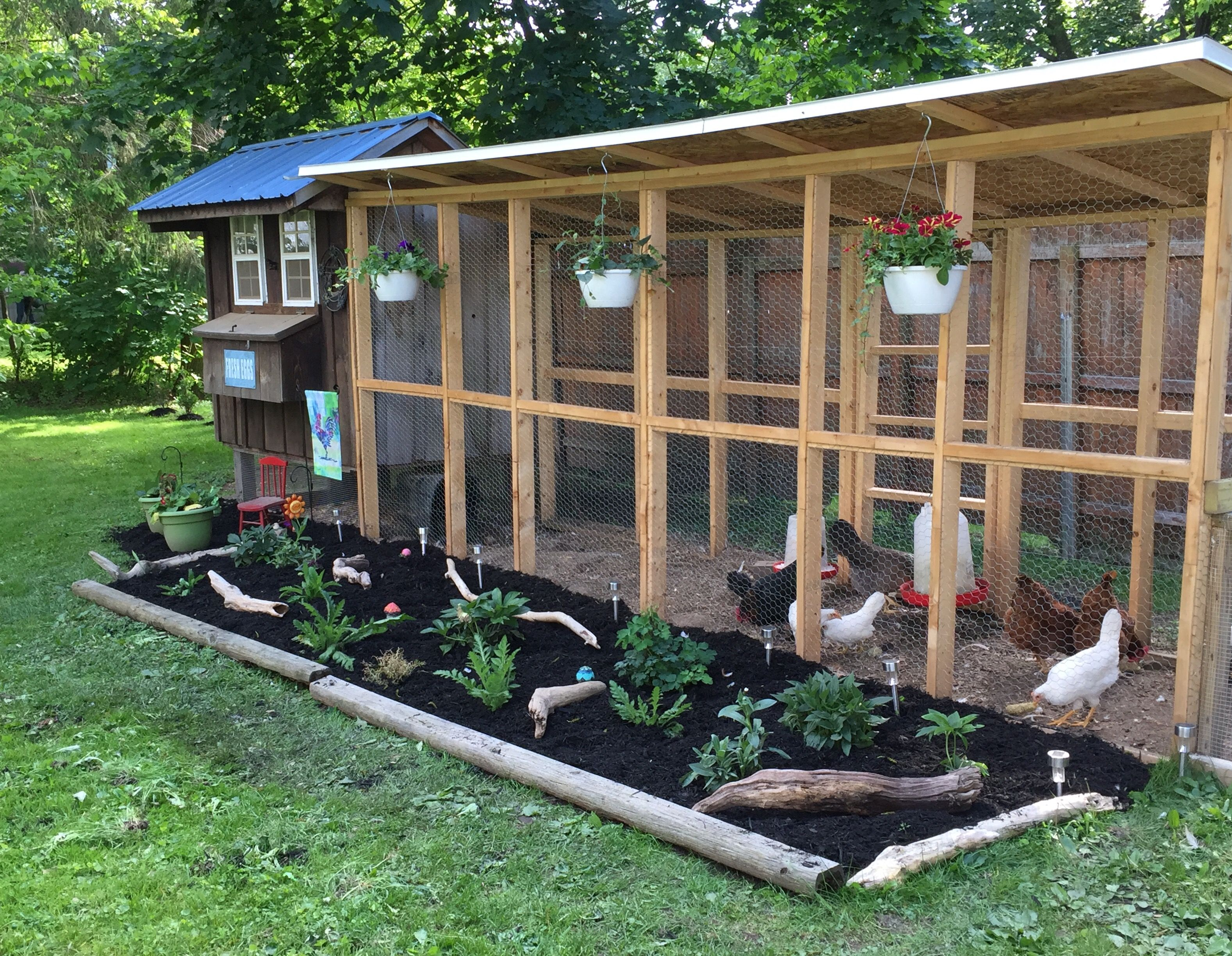 My chicken coop and run, my little piece of heaven in my ...