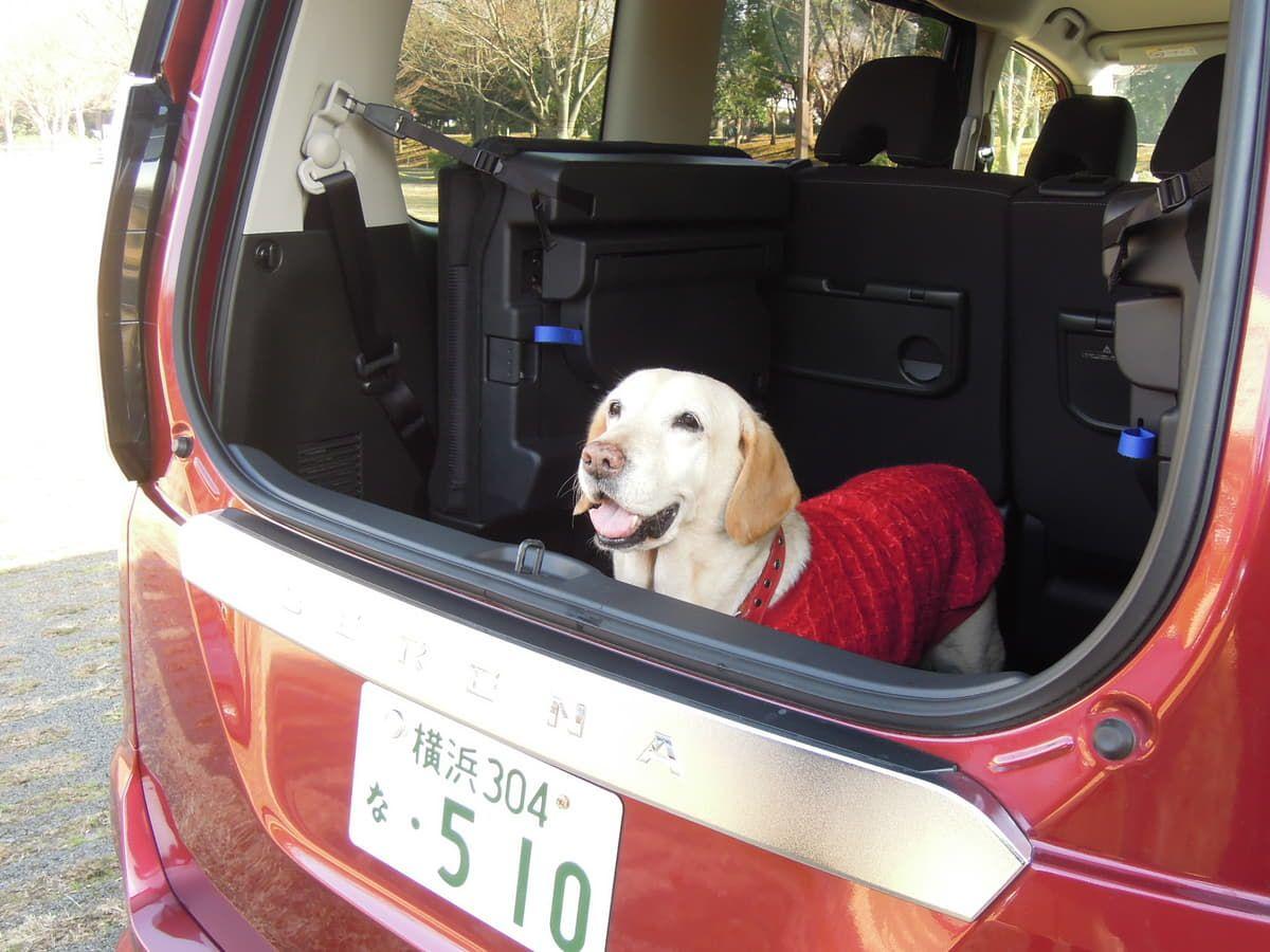 プロの愛犬家に聞く わんことの旅行に最適なクルマの条件とオススメ車種 犬 車 愛犬家 犬