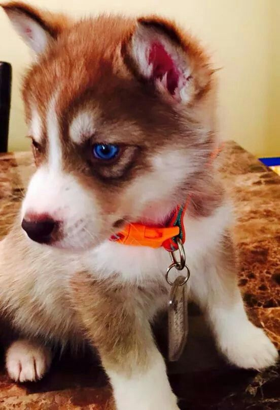 What A Beauty Love Pet Animal Lover Cute Animals