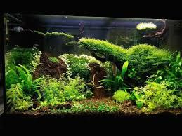 java moss aquascape - Google Search | Nature aquarium ...