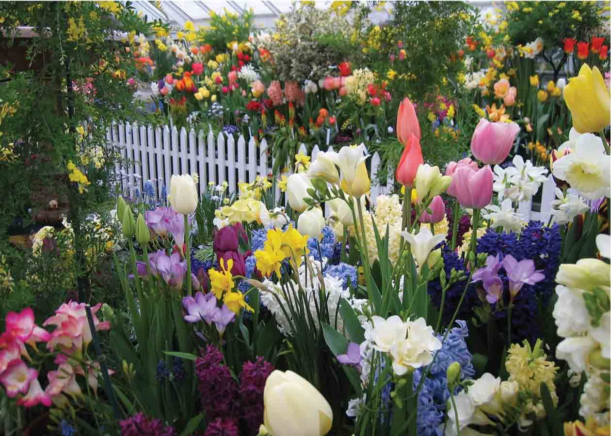 1000 images about Bulb Garden on Pinterest Gardens Spring and