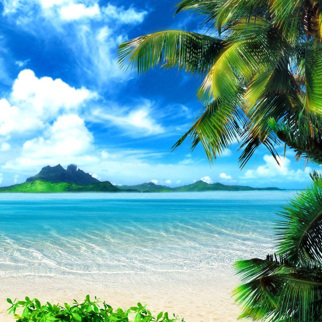 Tropical Animals wallpapers (56 Wallpapers)