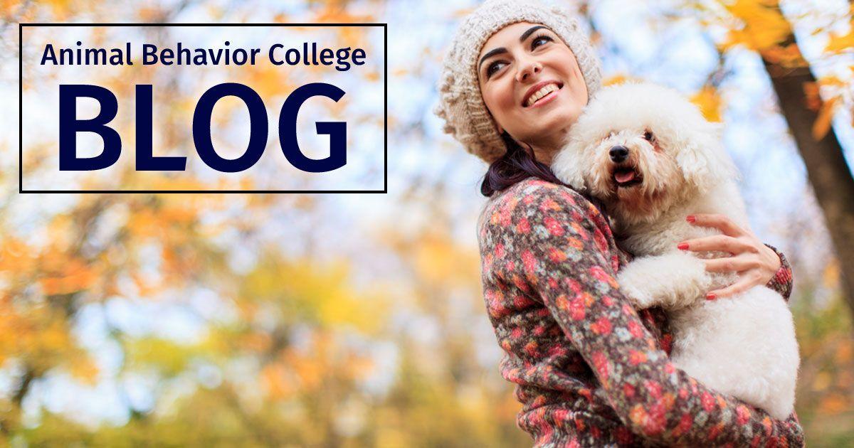 Animal Behavior College Is An Animal Career Training School Check