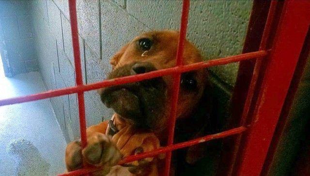 La foto di una cagnolina, scattata in un rifugio, con le ...