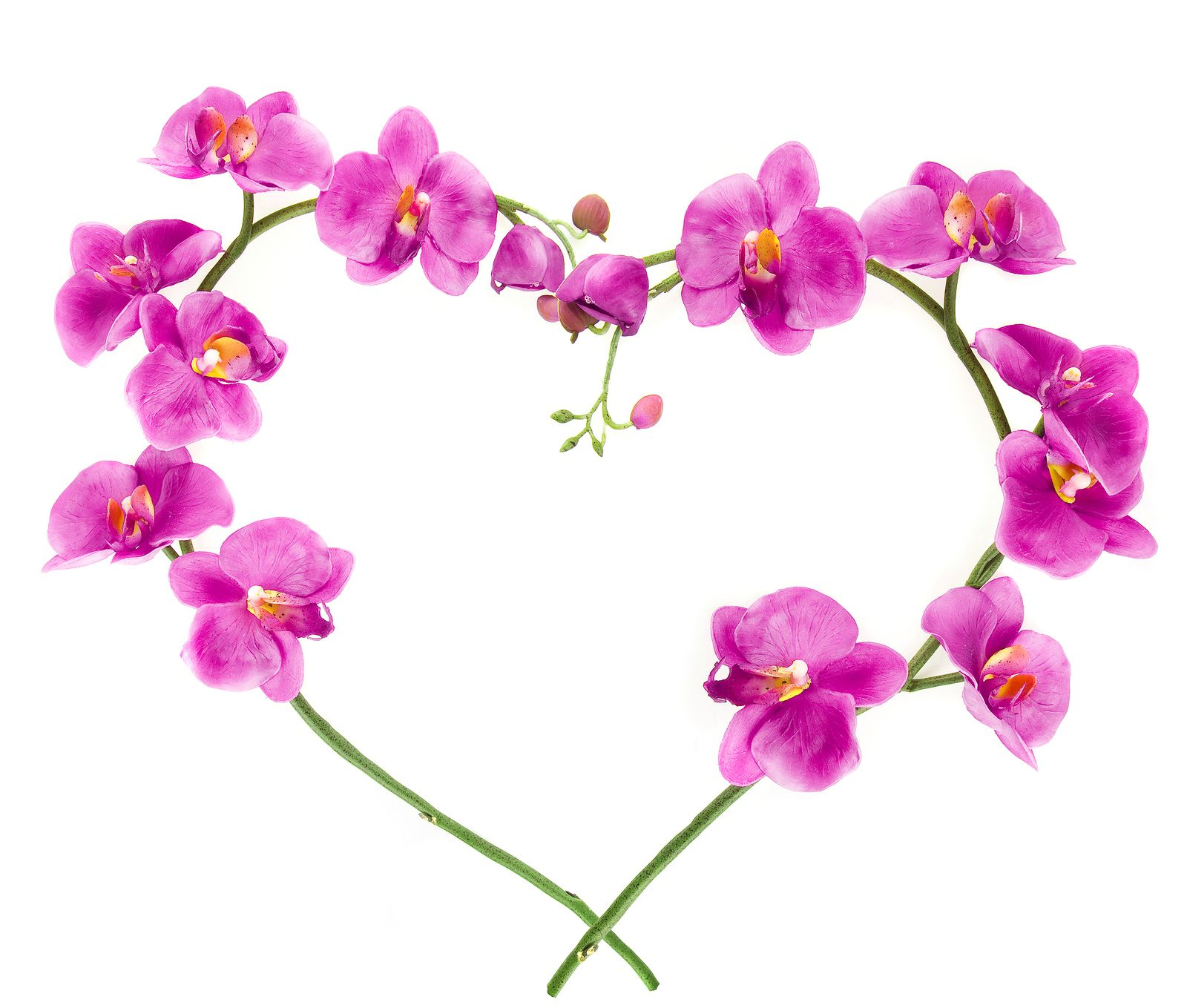 love pink orchid flower romantic wallpaper 24 hd wallpapers - Orchid