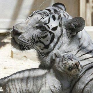 Mom and cub 😊😊😊 #About_animalslife