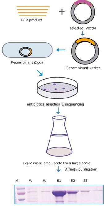 Pin On Molecular Biology