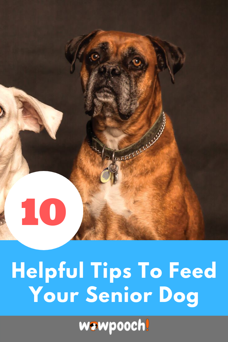 Best Dog Foods For Older Senior Dogs Dry Canned Special Nutritional Requirements For Older Senior Dog Food Recipes Best Dog Food Best Senior Dog Food