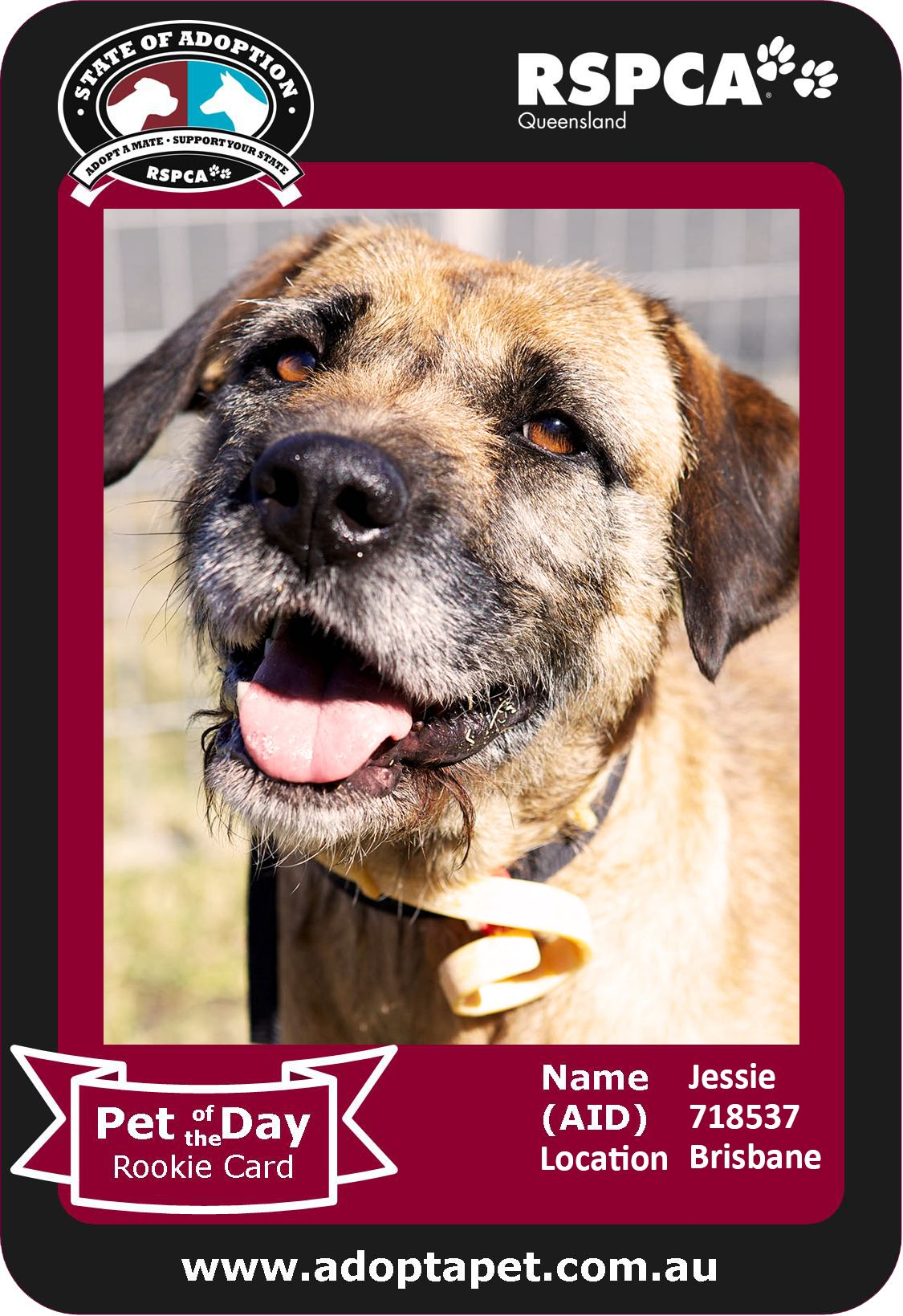 Hello I M Jessie And Don T Let My Looks Fool You I M Very Agile I Ve Jumped Straight Over A 4ft Fence For This Reason I Need To Animals Adoption Pet