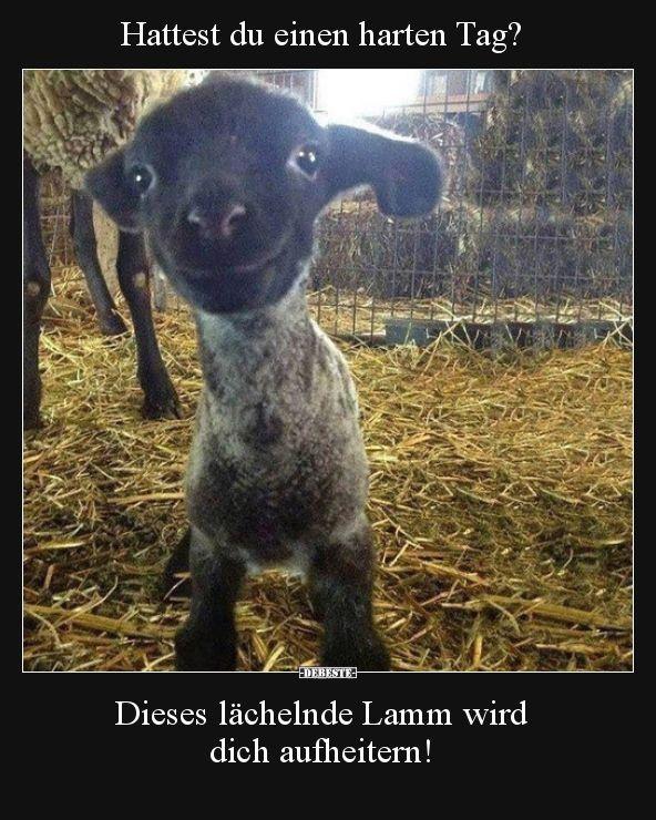 Hattest du einen harten Tag Dieses lächelnde Lamm wird  Lustige Bilder Spr
