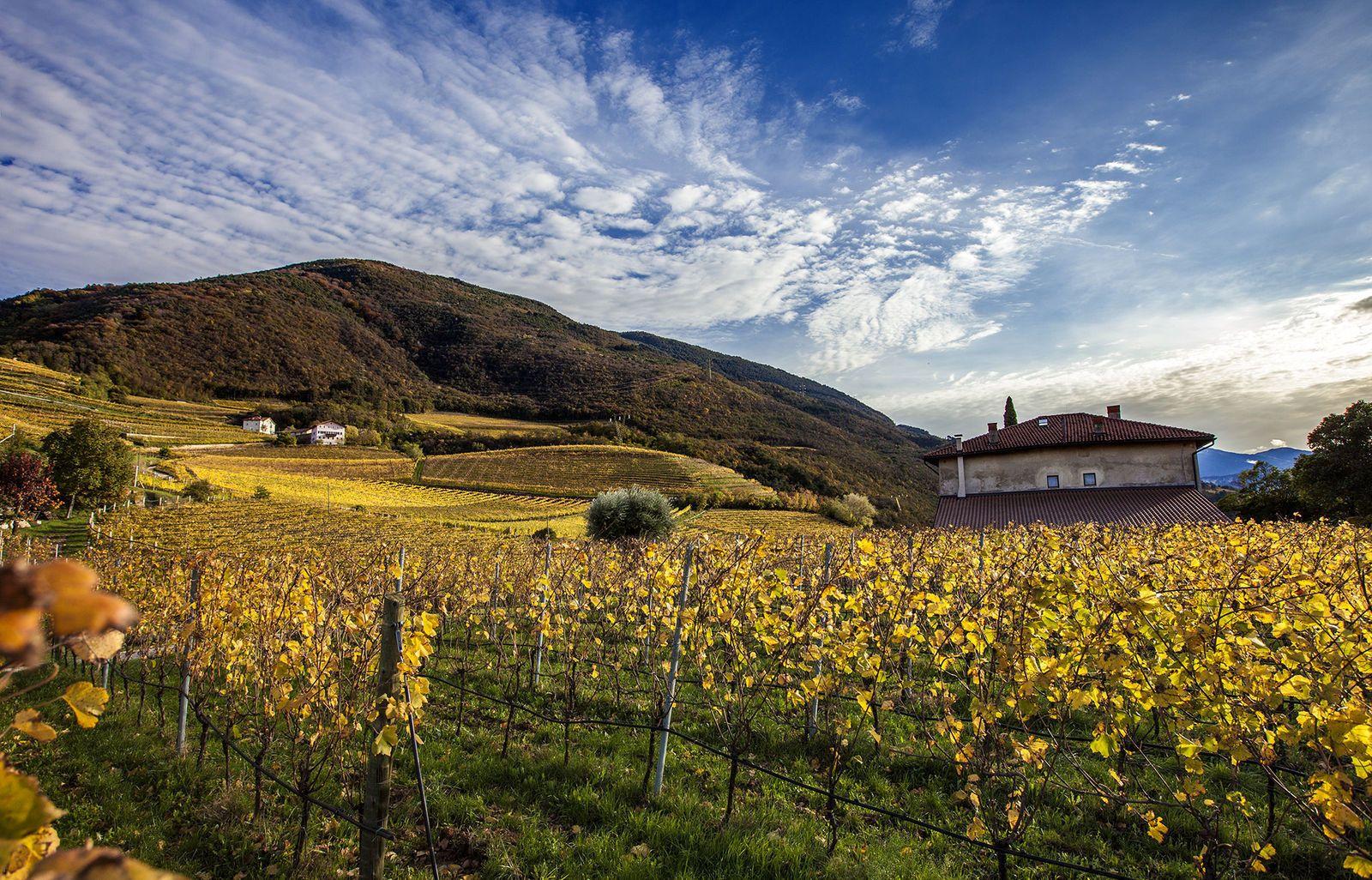 Vino Nostrum - Bellaveder