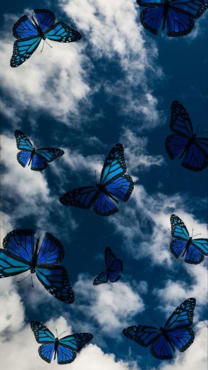 𝐏𝐢𝐧𝐭𝐫𝐞𝐬𝐭-𝐀𝐮𝐛𝐫𝐞𝐲🦋   Butterfly wallpaper iphone, Butterfly ...