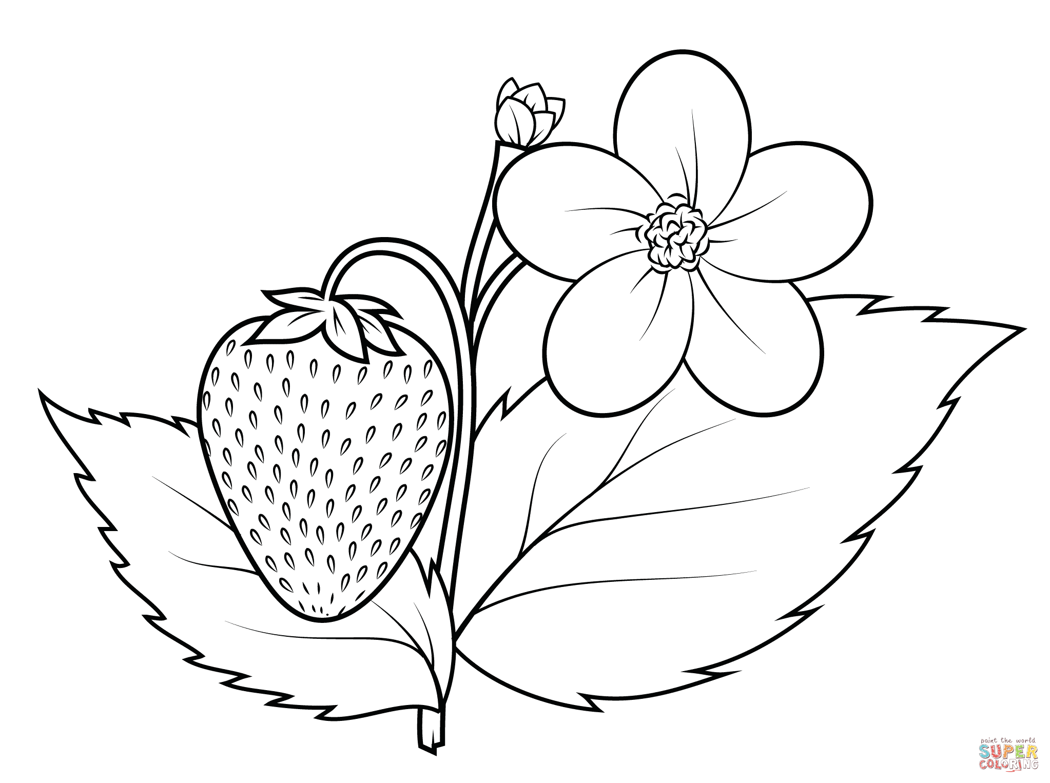 Strawberry Plant Coloring Page Free Printable Coloring Pages