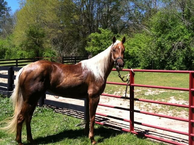 Barrel Horses For Sale Barrel Racing Lessons Equestrian Horses