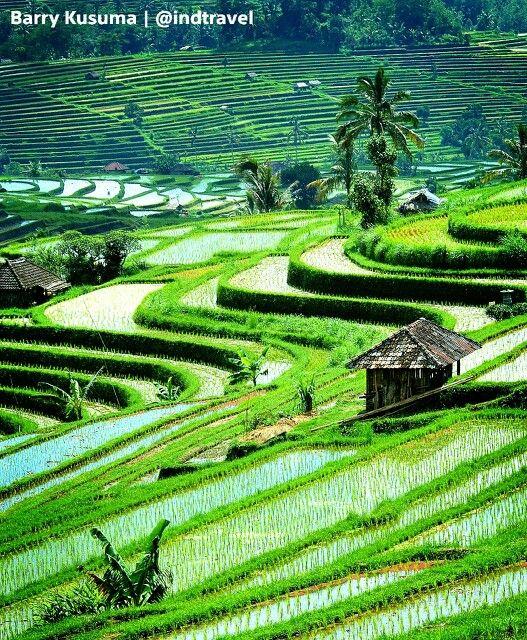 Terasering Sawah Jatiluwih Bali Yang Selalu Mempesona Wlsatawan Pemandangan Bali Bali Indonesia
