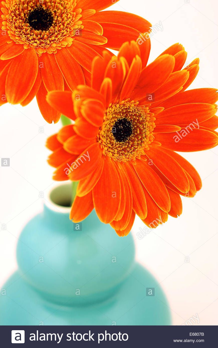 Bouquet Of Red Orange Gerbera Daisies In A Turquoise Vase Turquoise Vase Gerbera Daisy Photo Bouquet