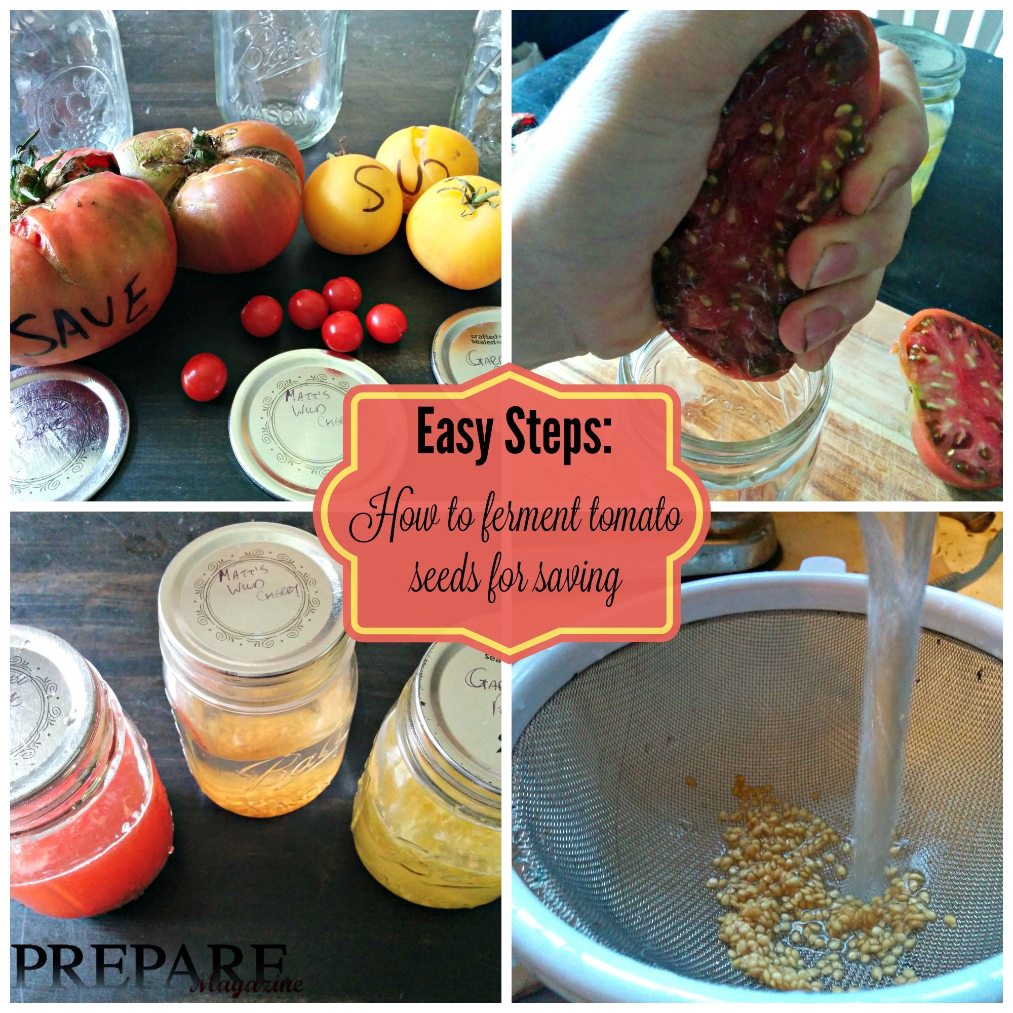 Easy steps how to ferment tomato seeds for saving lots