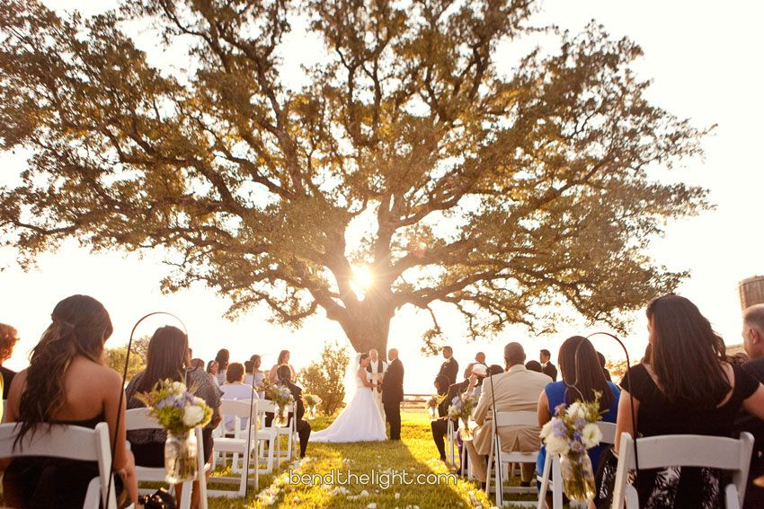 brian carolyn becker vineyards wedding reception fredericksburg texas