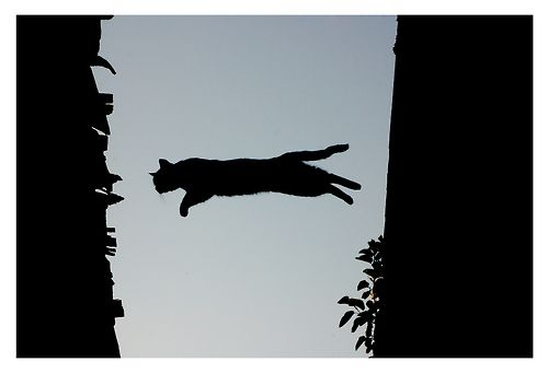 flying CAT (via _IXAN_)