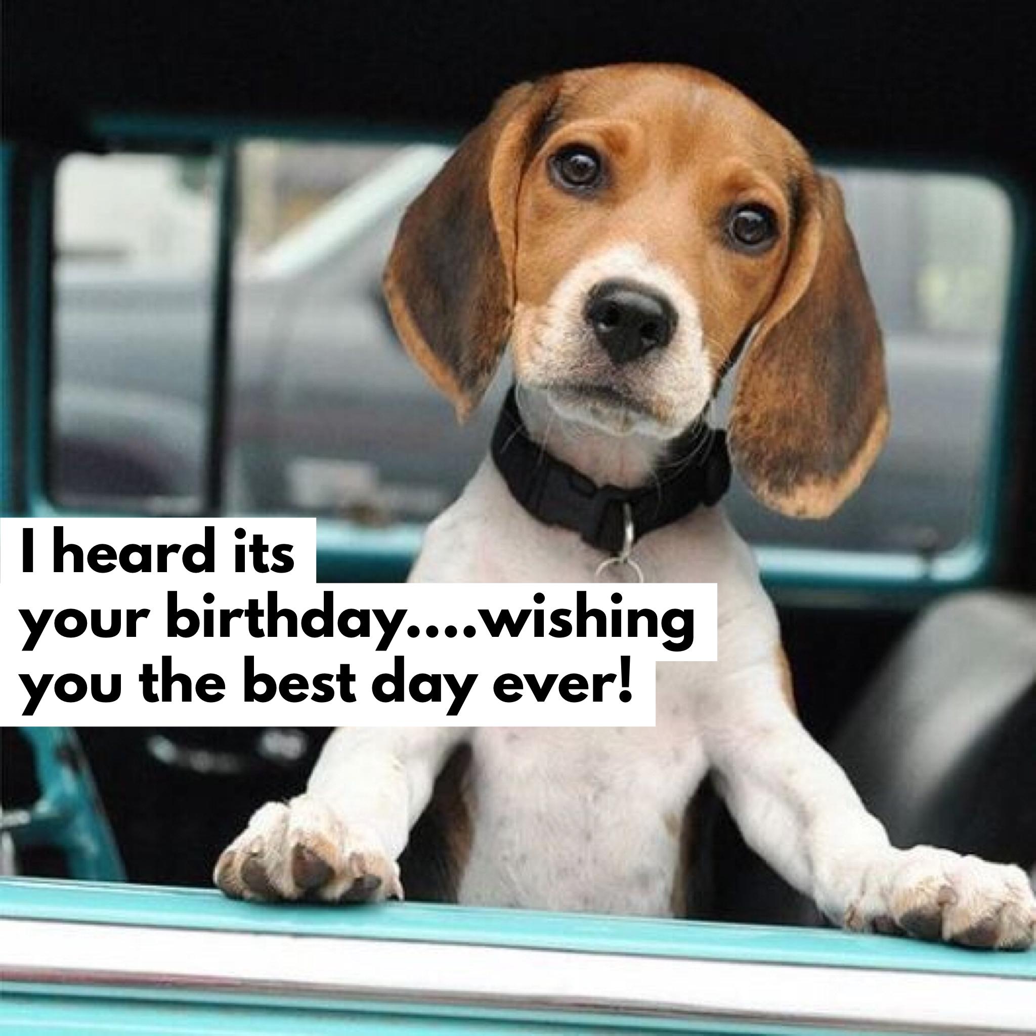 happy birthday beagle Heard its your birthday!   Happy Birthday Images and Quotes  happy birthday beagle