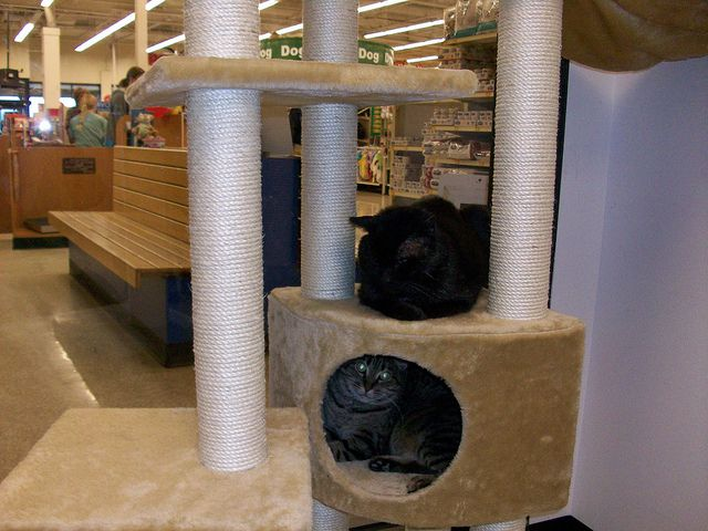 Jointly Purchased By Us And Southside Large Multi Level Cat Tower For The Petsmart Adoption Center Cattreescheap Com Cat Tower Petsmart Adoption Center