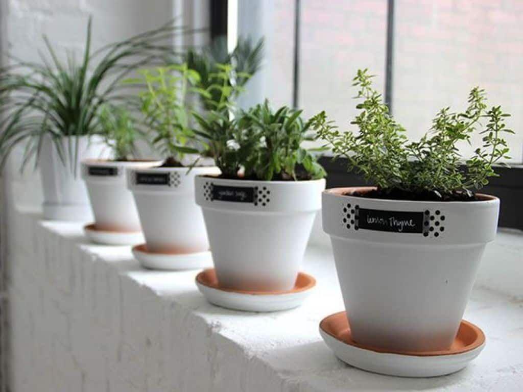 White Windowsill Herb Garden Pots
