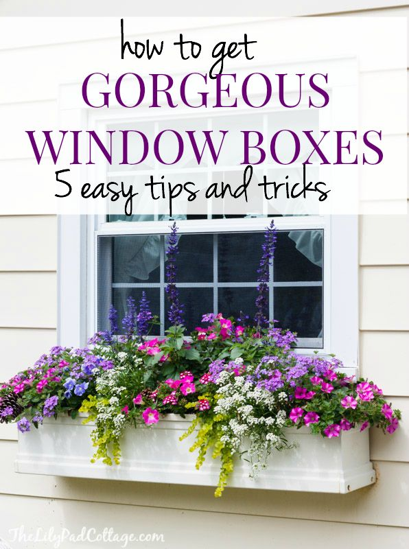 5 Tips For Gorgeous Window Boxes Flower Box Ideas Pinterest