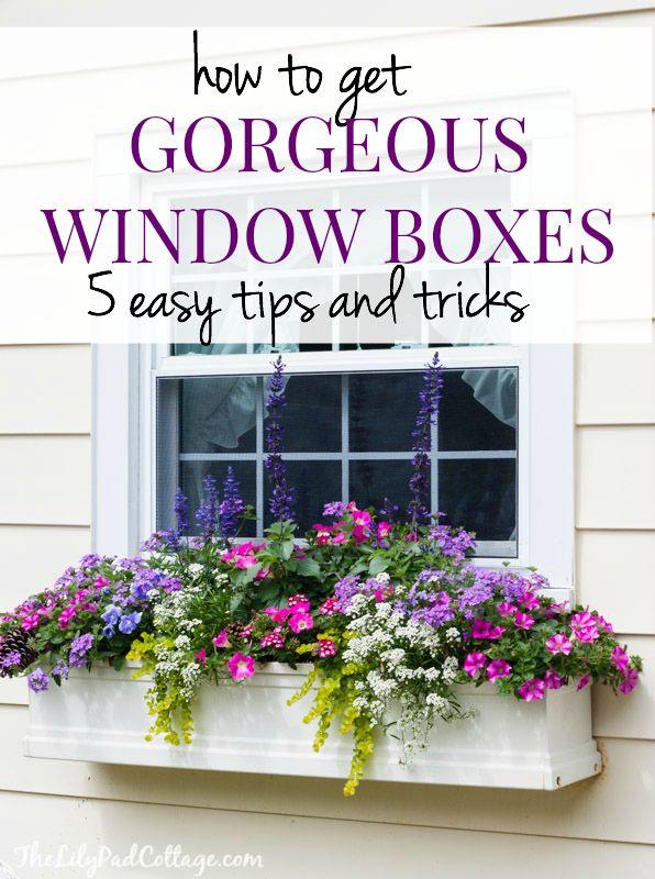 De magnifiques conseils de boîte de fenêtre