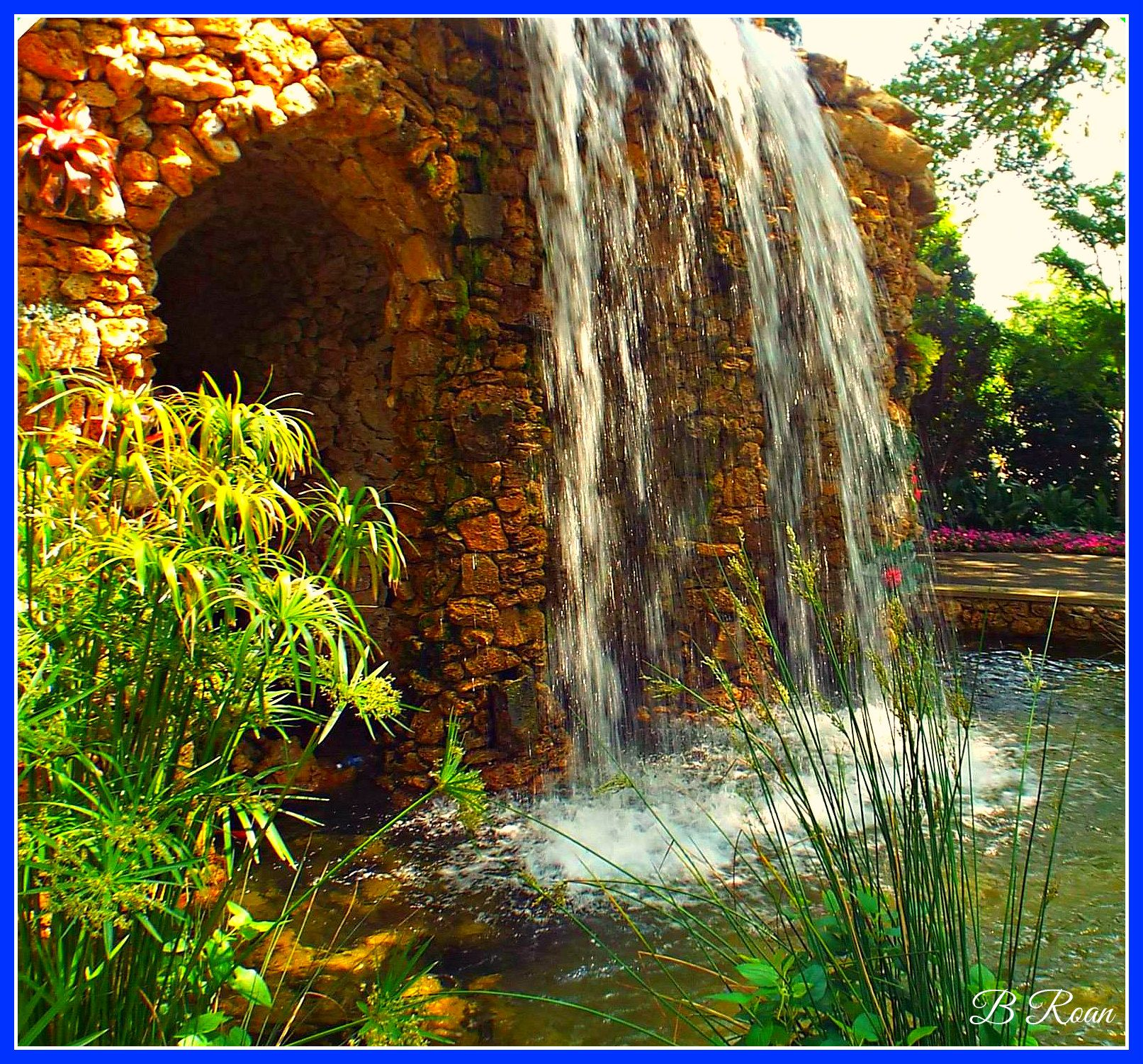 Pin by Billy Roan on Dallas Arboretum and Botanical Gardens ...