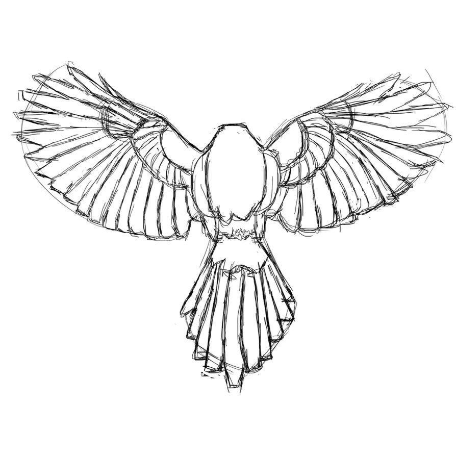 Line Drawing Wings : Owl wingspan drawing imgkid the image kid has it