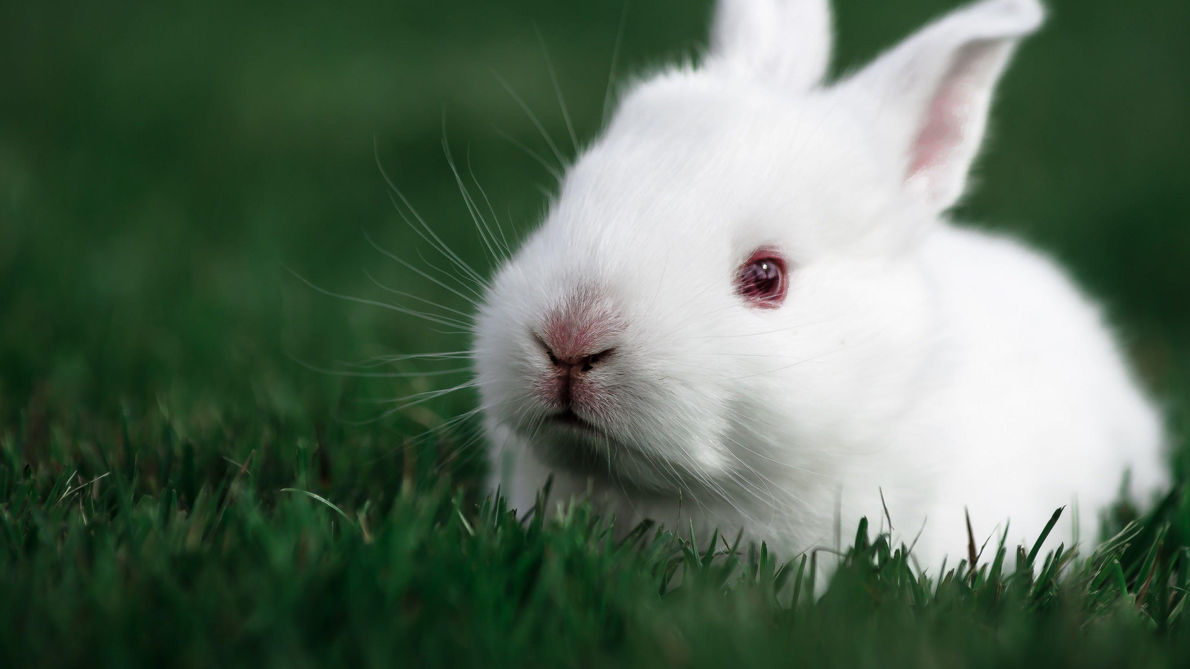 Bunnies Animals 1920x1200 Wallpaper Rabbit Wallpaper Beautiful Rabbit Animals