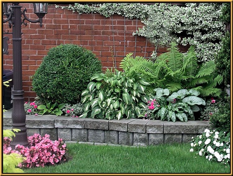 Garden Ideas Zone 6 love the green velvet boxwood with the color contrasts of the