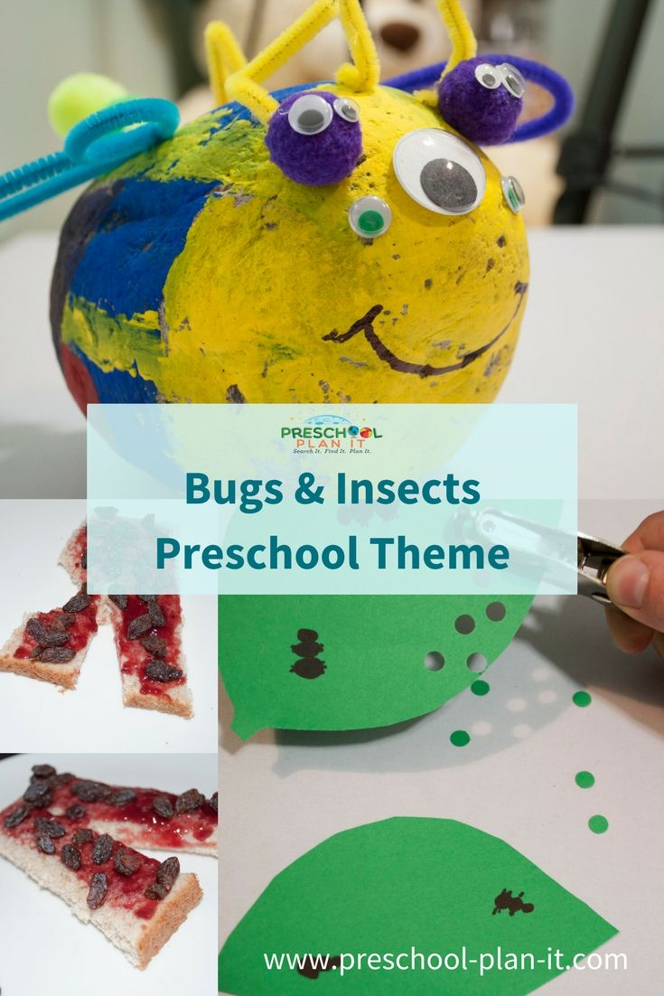 Bugs and Insects Preschool Theme | Preschool themes, Insects and ...