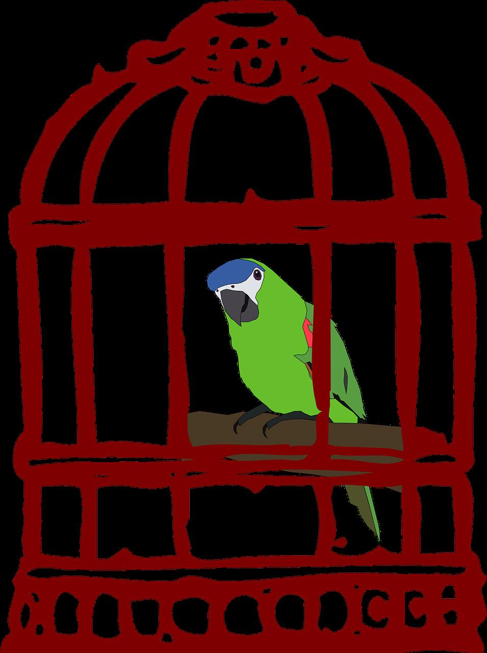 Pin By Serenity Studio Art On Bird Cages Public Domain Small Bird Cage Cartoon Clip Art Bird Cage