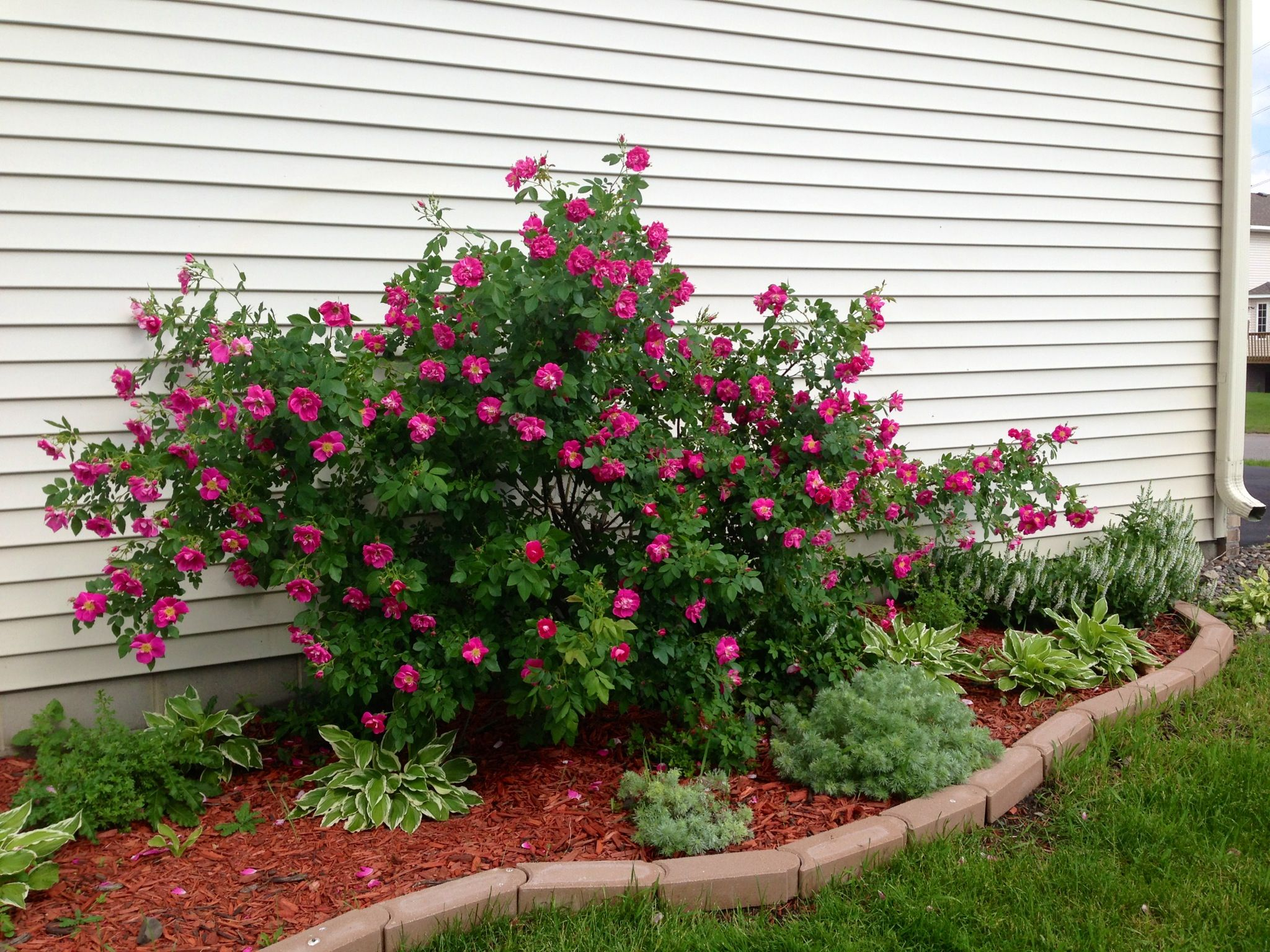 landscaping ideas mulch