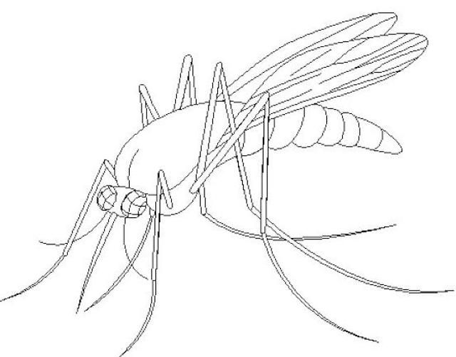 Funny mosquito cartoon coloring page - Topcoloringpages.net | 501x640