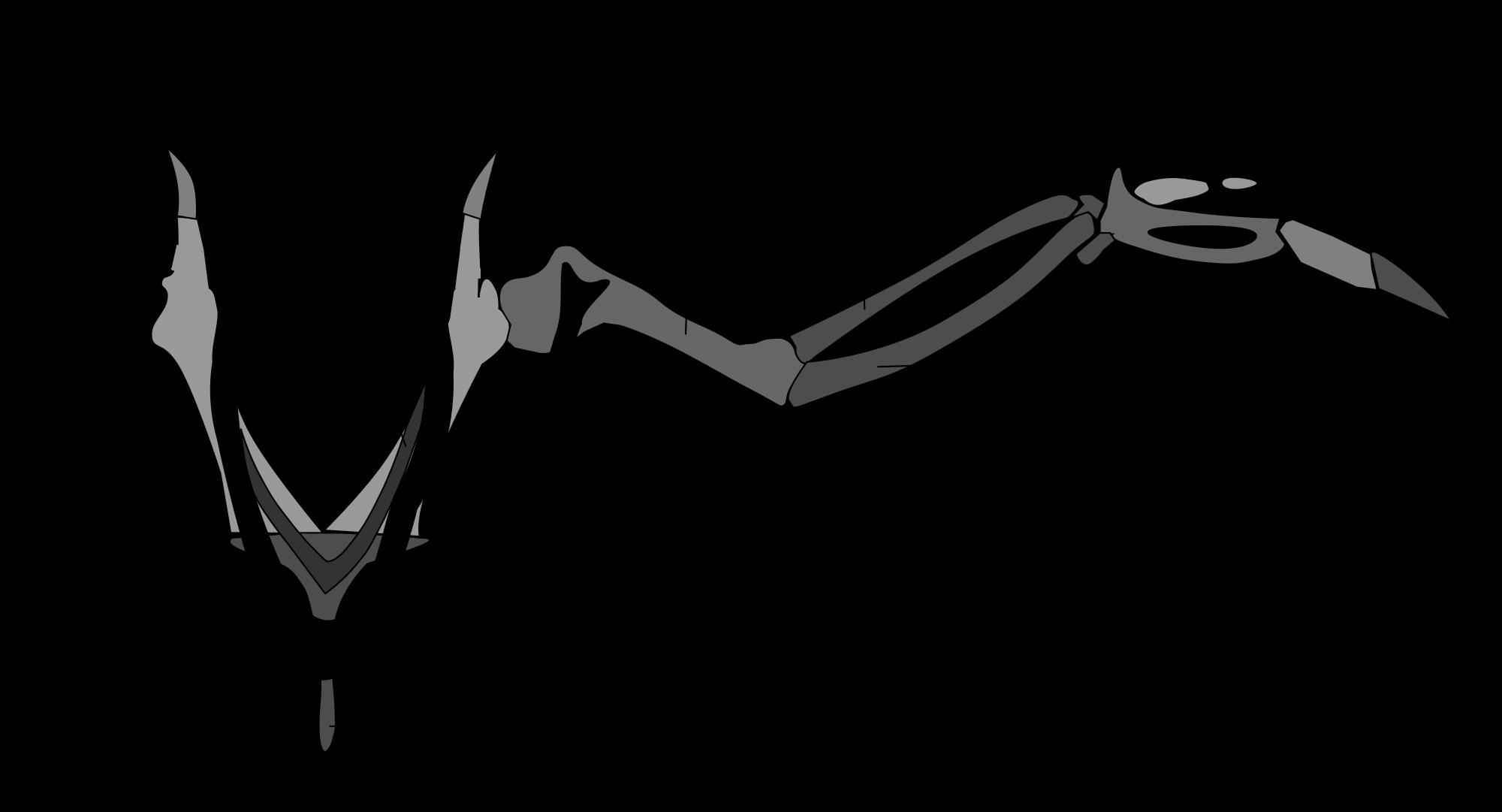 muscle orientation wings - Google Search | Robots Etc. | Pinterest ...