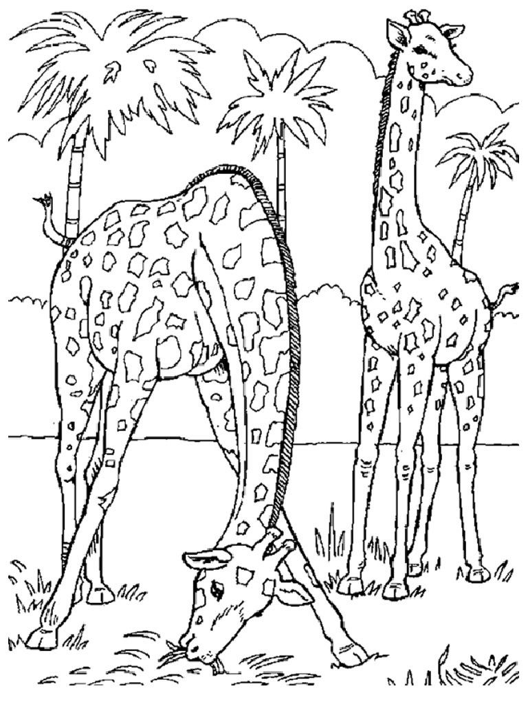 Realistic giraffe coloring pages for adults Coloring