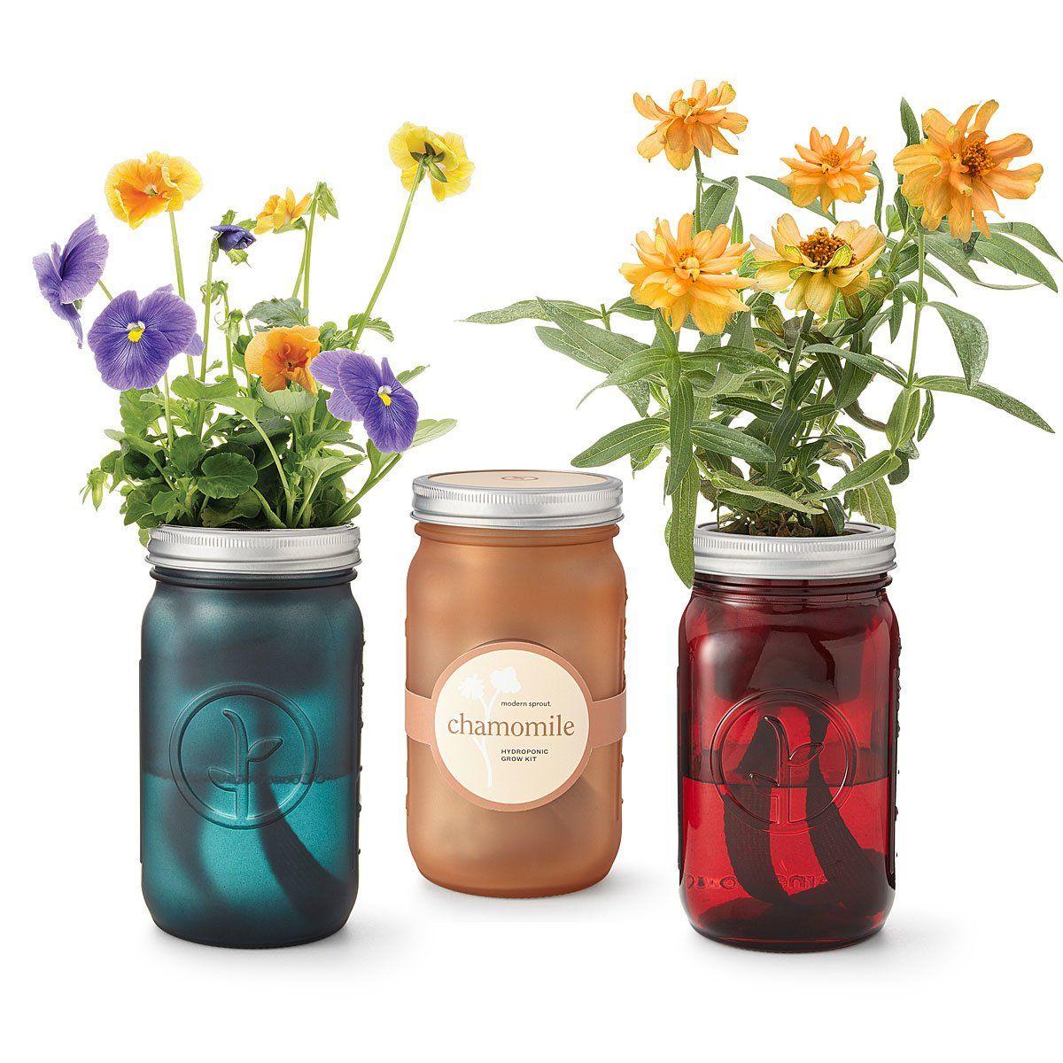 mason jar indoor flower garden giftadvisor com with on indoor herb garden diy wall mason jars id=86690