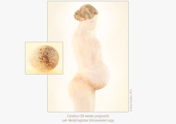 Anne Geddes My Pregnancy Candice Beautiful Babies And